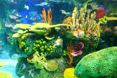 Colorful aquarium background Stock Photography