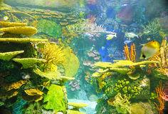 Colorful aquarium background Royalty Free Stock Photography