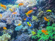 A colorful aquarium with beautiful fish, plants and corals stock images