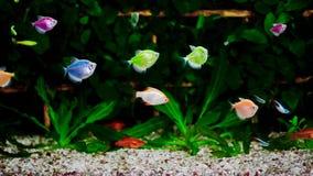 Colorful aquarium, beautiful fish swimming in water.