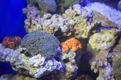 The colorful aquarium Stock Image