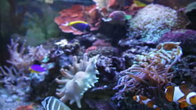 Colorful Aquarium Fish. Clean environment with corals and colourful fishes. Coral reef with beautiful inhabitants and plants. Different kinds of sea fish in a stock footage