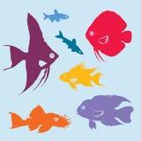 Colorful Aquarium Fish Silhouettes Set Royalty Free Stock Photos