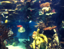 Colorful aquarium, showing different colorful fishes swimming. Blurred background of colorful aquarium, showing different colorful fishes swimming Royalty Free Stock Photos