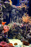 Colorful aquarium, showing different colorful fishes swimming. Portugal Stock Photography