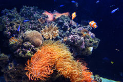 Colorful aquarium, showing different colorful fishes swimming. Portugal Royalty Free Stock Photos
