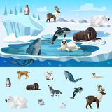Colorful Arctic Wildlife Concept. With different north animals in cartoon style vector illustration Stock Photos