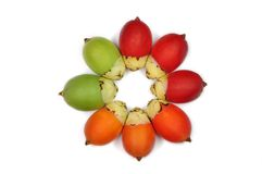 Colorful Areca Or Betal Palm Stock Image