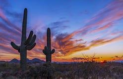 Free Colorful Arizona Sunset With 2 Cactus Near Phoenix Royalty Free Stock Photo - 167825945
