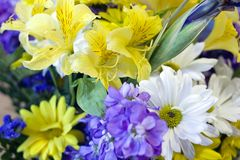 Colorful Arrangement royalty free stock image
