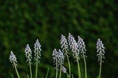 Colorful arrangement of fresh spring blue flowers Stock Photos