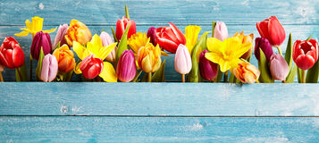 Colorful arrangement of fresh spring flowers Stock Photos