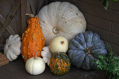 Colorful Arrangement of Pumpkins Stock Photography