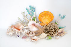 Colorful arrangement of sea shells and coral royalty free stock image