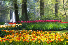 Colorful arrangement of tulips in spring Stock Photo