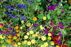 Colorful Array of Flowers royalty free stock photo