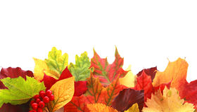 Colorful Array Of Autumn Leaves Forming A Border Royalty Free Stock Images