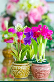 Colorful of Artificial Flower. Stock Images