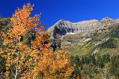 Colorful aspen grove in the Rocky Mountains. Stock Photo
