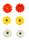 Colorful assorted daisies. A view of an isolated assortment of orange, yellow and white gerber daises Stock Photography