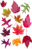 Colorful assortment of fall leaves Stock Images