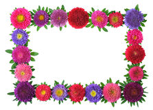 Colorful aster floral frame Stock Photo