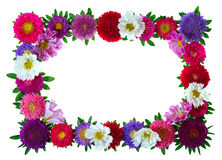 Colorful Aster Floral Frame Stock Images