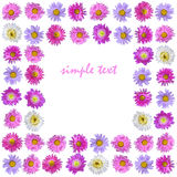 Colorful aster flowers frame isolated Stock Images