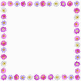 Colorful aster flowers frame isolated Royalty Free Stock Image