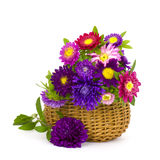 Colorful asters flowers in a basket Stock Photo