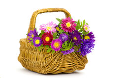 Colorful asters flowers in a basket Stock Photography