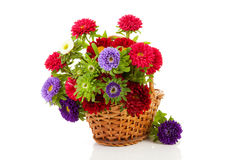 Colorful Asters flowers in cane basket Royalty Free Stock Photos