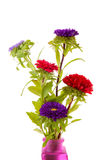 Colorful Asters flowers in vase Stock Photo
