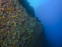 Colorful Atoll Reef Wall Royalty Free Stock Photo