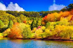 Colorful Australian autumn in Adelaide Hills. Colorful Australian autumn in Mount Lofty, Adelaide Hills, South Australia stock images