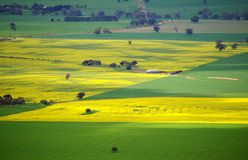 Colorful Australian Meadows Stock Images