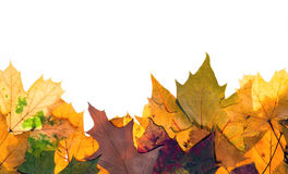 Colorful autum leaves. Colorful autumn leaves with copy space at top Royalty Free Stock Photography