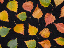 Colorful autum leaves Stock Photo