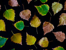 Colorful autum leaves Stock Photography