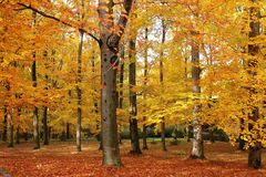 Colorful autumn. Trees in the park changing colors in the fall. Seasonal photo Royalty Free Stock Image