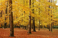 Colorful autumn. Trees in the park changing colors in the fall. Seasonal photo Stock Photography