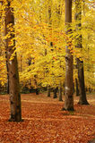 Colorful autumn. Trees in the park changing colors in the fall. Seasonal photo Stock Image