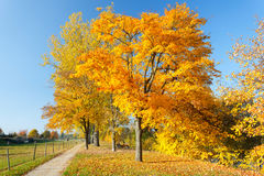 Colorful autumn. Colorful trees in the autumn park Stock Images