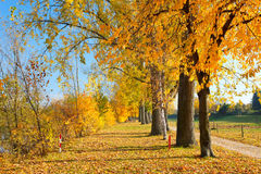 Colorful autumn. Colorful trees in the autumn park Stock Photos