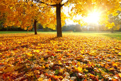 Colorful autumn. Colorful foliage in the autumn park Stock Photos