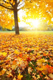 Colorful autumn. Colorful foliage in the autumn park Royalty Free Stock Image