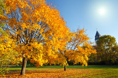 Colorful autumn Royalty Free Stock Images