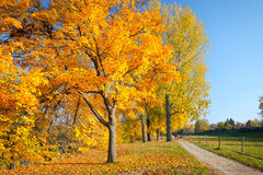 Colorful autumn Royalty Free Stock Image