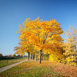 Colorful autumn. Colorful trees in the autumn park Royalty Free Stock Photos