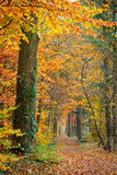 Colorful autumn. Pathway in the autumn forest, Germany Stock Photo